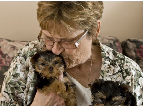 Dear friend and Yorkshire Terrier breeder Linda Bush, kisses Paco after two of her Yorkshire terriers were recovered.